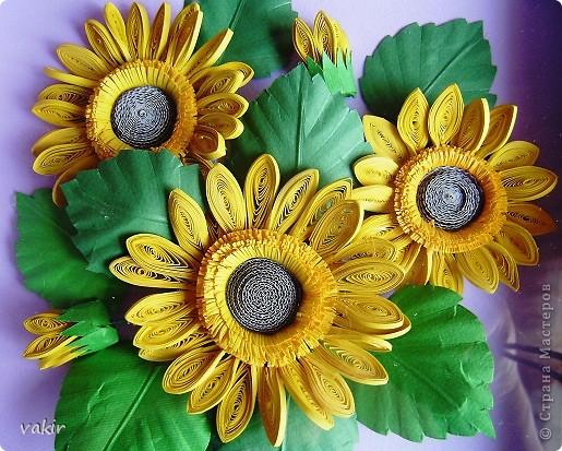 Всем доброго времени суток! Сегодня у меня расцвели подсолнухи! Давно уже облизывалась, любуясь подсолнухами мастериц! Наконец, вырастила и свои в подарок родственнице, замечательному светлоу человеку, которая тоже очень любит эти солнечные цветы. Сразу же приношу извинения за некоторые не очень качественные фото, выполненные с помощью мобильного, на них искажены цвета. фото 2