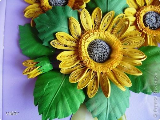 Всем доброго времени суток! Сегодня у меня расцвели подсолнухи! Давно уже облизывалась, любуясь подсолнухами мастериц! Наконец, вырастила и свои в подарок родственнице, замечательному светлоу человеку, которая тоже очень любит эти солнечные цветы. Сразу же приношу извинения за некоторые не очень качественные фото, выполненные с помощью мобильного, на них искажены цвета. фото 3