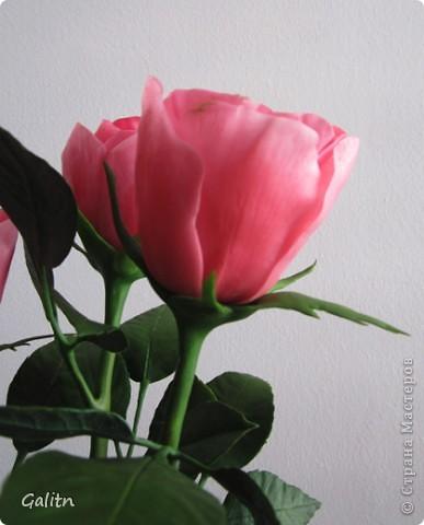 Вот так. без всяких композиций, выставляю мою новую работу. Что бы я не лепила, время от времени меня прибивает на розы.Хочется попробовать разные- открытые. полузакрытые и в разном цвете........ фото 5