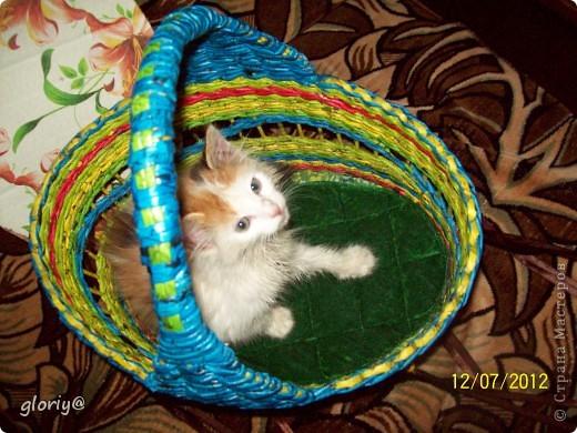 Привет всем, вот решила поделиться следующей работой. Были в гостях, приобрели кошку, и стал вопрос: Как же ее везти домой???? Вот мы не долго думая начали творить.... фото 1