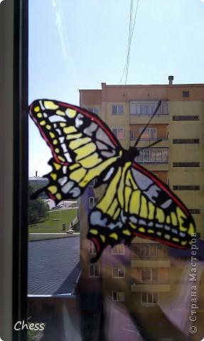 Тропические бабочки за сибирскими окнами фото 1