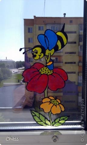 Тропические бабочки за сибирскими окнами фото 4