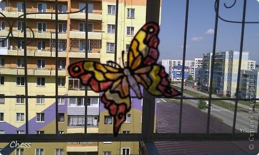 Тропические бабочки за сибирскими окнами фото 2