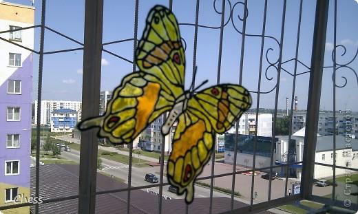 Тропические бабочки за сибирскими окнами фото 3