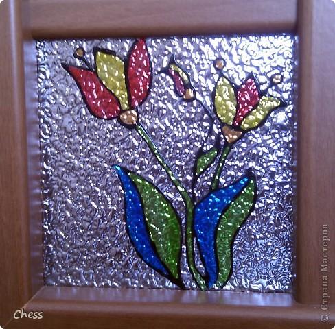 Тропические бабочки за сибирскими окнами фото 5