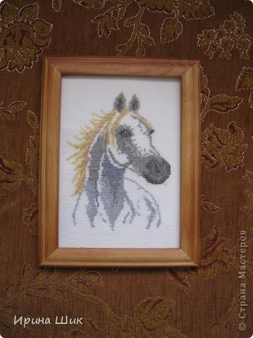 Белая лошадь фото 1