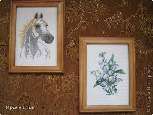 Белая лошадь фото 3