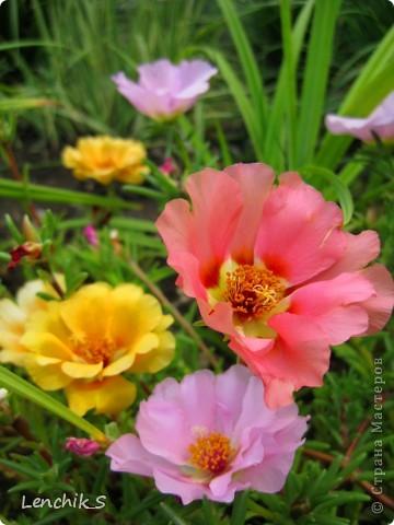 Дорогие жители нашей замечательной страны мастеров, хочу пригласить вас  на прогулку в  Донецкий ботанический сад, а точнее познакомить вас с частью его цветочных экспозиций. Для того чтобы наша прогулка была не скучной, мы будем ее сопровождать замечательными стихами о цветах: Что есть цветы? Трава по сути.  Но как красой ласкают взгляд. фото 1