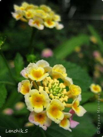 Дорогие жители нашей замечательной страны мастеров, хочу пригласить вас  на прогулку в  Донецкий ботанический сад, а точнее познакомить вас с частью его цветочных экспозиций. Для того чтобы наша прогулка была не скучной, мы будем ее сопровождать замечательными стихами о цветах: Что есть цветы? Трава по сути.  Но как красой ласкают взгляд. фото 2