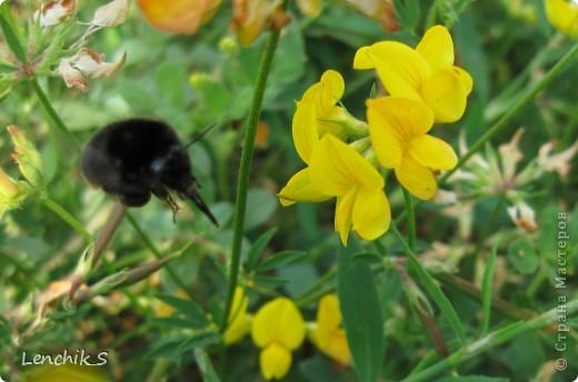 Дорогие жители нашей замечательной страны мастеров, хочу пригласить вас  на прогулку в  Донецкий ботанический сад, а точнее познакомить вас с частью его цветочных экспозиций. Для того чтобы наша прогулка была не скучной, мы будем ее сопровождать замечательными стихами о цветах: Что есть цветы? Трава по сути.  Но как красой ласкают взгляд. фото 31