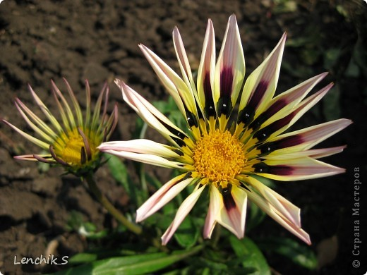 Дорогие жители нашей замечательной страны мастеров, хочу пригласить вас  на прогулку в  Донецкий ботанический сад, а точнее познакомить вас с частью его цветочных экспозиций. Для того чтобы наша прогулка была не скучной, мы будем ее сопровождать замечательными стихами о цветах: Что есть цветы? Трава по сути.  Но как красой ласкают взгляд. фото 26