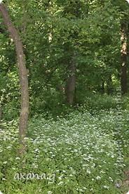 Живу я в большом промышленном городе Кривой Рог. У нас есть очень много  красивых мест где можно пообщаться с природой. Приглашаю вас на прогулку. Вот одна из наших рек Ингулец. фото 7