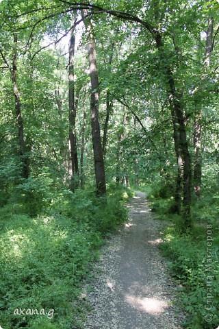 Живу я в большом промышленном городе Кривой Рог. У нас есть очень много  красивых мест где можно пообщаться с природой. Приглашаю вас на прогулку. Вот одна из наших рек Ингулец. фото 6