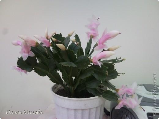 Цветы и не только... фото 14