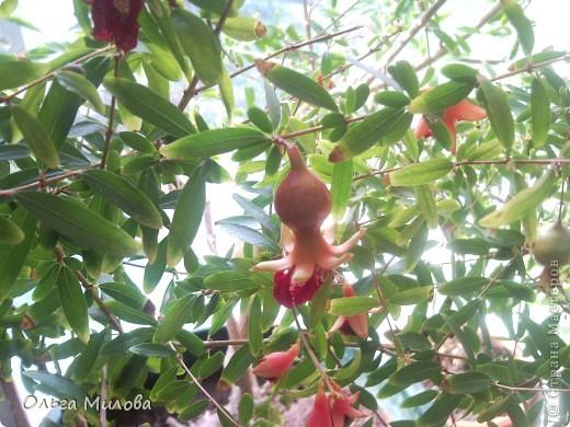 Цветы и не только... фото 16