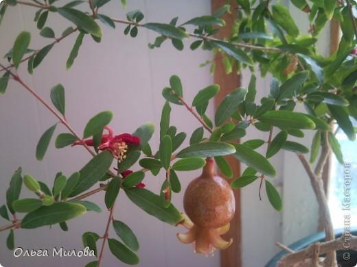 Цветы и не только... фото 19