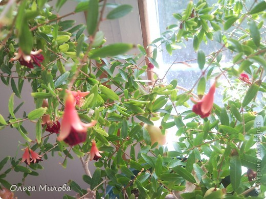 Цветы и не только... фото 20
