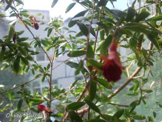 Цветы и не только... фото 21