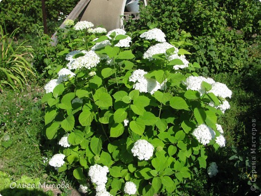 Цветы и не только... фото 2