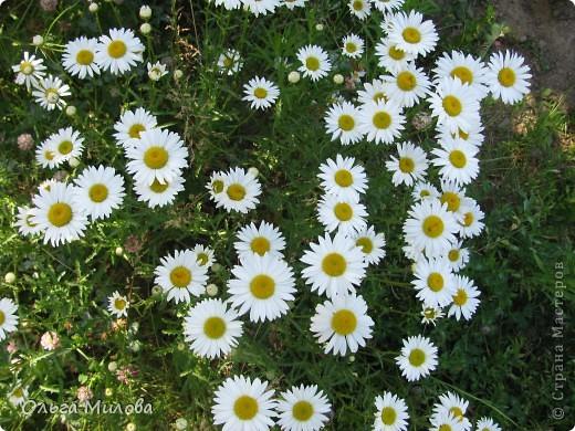 Цветы и не только... фото 3