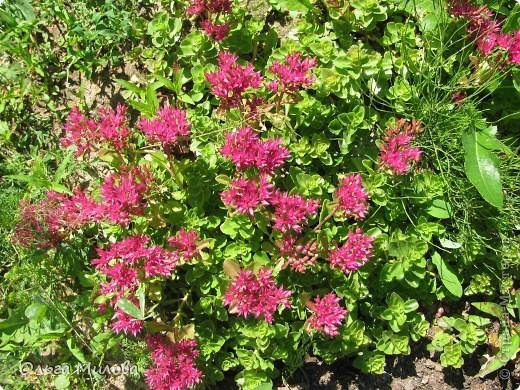 Цветы и не только... фото 4