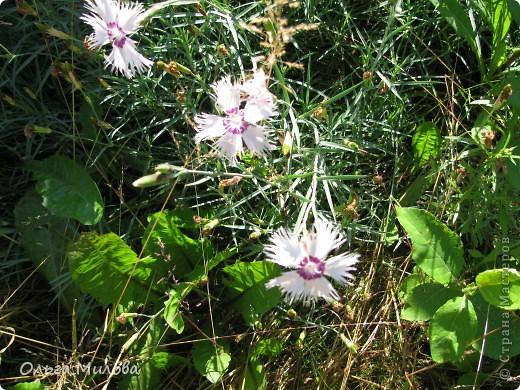 Цветы и не только... фото 5