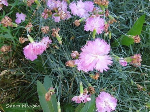 Цветы и не только... фото 6