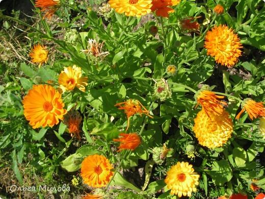 Цветы и не только... фото 7
