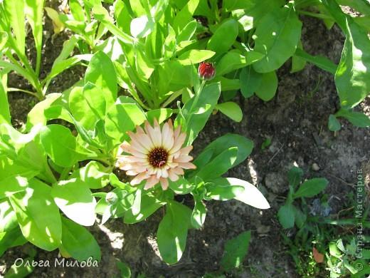 Цветы и не только... фото 8