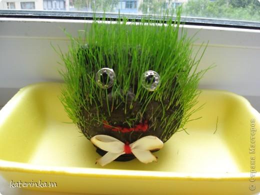 Всем привет! Теперь и у нас живёт травяное существо. И всё благодаря вот этому МК http://stranamasterov.ru/node/372081 . Делала вместе со старшим сыном, ему очень понравилось участвовать.  Это наш Травчик прорастать начал. Где-то на 7-8 день стал таким. фото 1