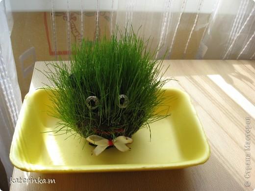 Всем привет! Теперь и у нас живёт травяное существо. И всё благодаря вот этому МК http://stranamasterov.ru/node/372081 . Делала вместе со старшим сыном, ему очень понравилось участвовать.  Это наш Травчик прорастать начал. Где-то на 7-8 день стал таким. фото 4
