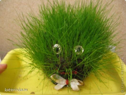 Всем привет! Теперь и у нас живёт травяное существо. И всё благодаря вот этому МК http://stranamasterov.ru/node/372081 . Делала вместе со старшим сыном, ему очень понравилось участвовать.  Это наш Травчик прорастать начал. Где-то на 7-8 день стал таким. фото 5