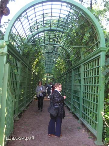 Одно из чудеснейших мест в Санкт-Петербурге - Летний сад, в котором находится Летний дворец Петра Первого. фото 3