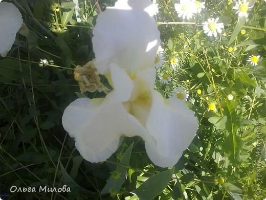 Цветы и не только... фото 10