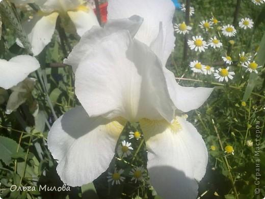 Цветы и не только... фото 11
