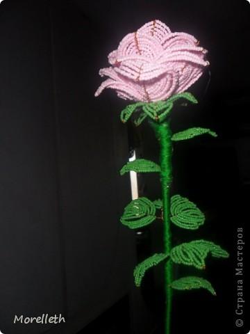 Роза)) фото 2