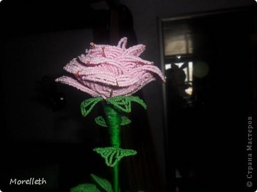 Роза)) фото 3