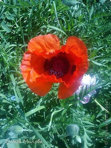Цветы и не только... фото 13