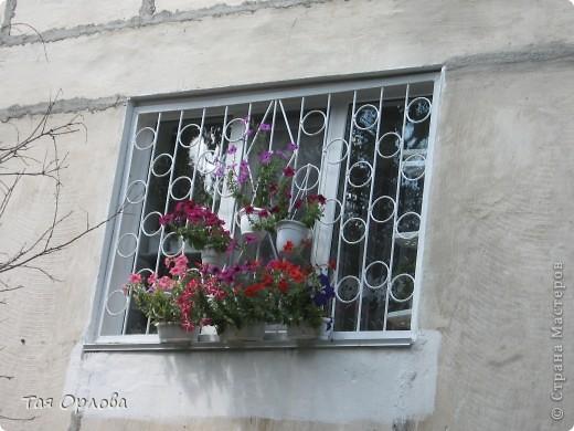 Приветик всем! К сожалению у нас нет ни огорода,ни дачи.Несколько лет подряд я выращивала летом цветы в горшках за окном.А в этом году решила в эти же горшки высадить огурцы.Было очень интересно ,что из этого получится.И вот сегодня 15июля 2012 г я хочу с гордостью сказать,что эксперимент удался!!!УРА!!!Урожай правда пришлось ждать долговато-погода в начале июня внесла свои коррективы:было прохладно и шли дожди.Мои огурчики долго болели.Но вот сегодня нашей семьей был торжественно съеден первый собственноручно выращенный огурец.Вкусный,сладкий оказался,а главное экологически чистый продукт.  фото 2