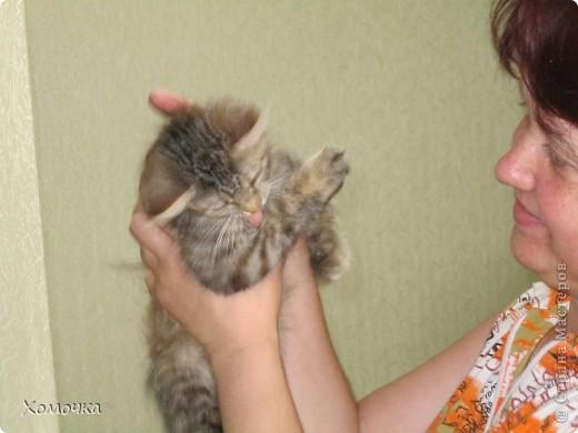 В общем, было у меня две мечты: отдельная квартира и кошка. Так вот жизнь сложилась, что сбылись они только на пятом десятке... Зато обе сразу! Мы с мужем переехали от моей мамы в свое жилье !!!!! и тут же взяли котенка фото 4