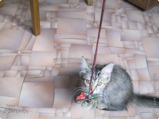 В общем, было у меня две мечты: отдельная квартира и кошка. Так вот жизнь сложилась, что сбылись они только на пятом десятке... Зато обе сразу! Мы с мужем переехали от моей мамы в свое жилье !!!!! и тут же взяли котенка фото 2