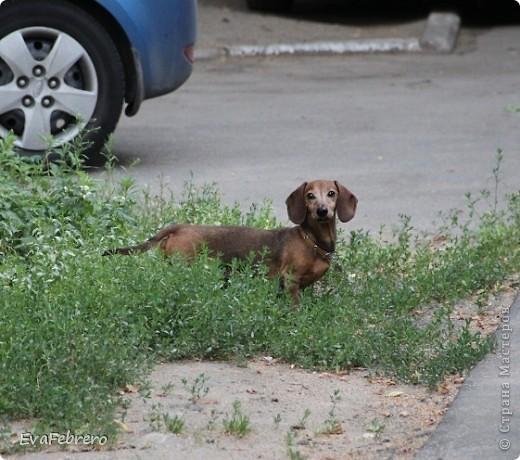 """""""Коричневый"""" фото 1"""