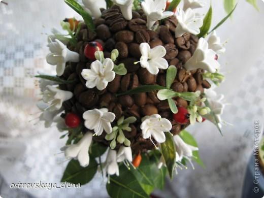 Кофейное деревце. фото 4
