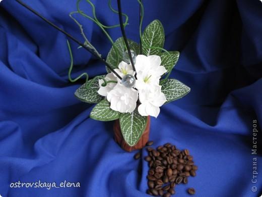 Кофейное деревце. фото 15
