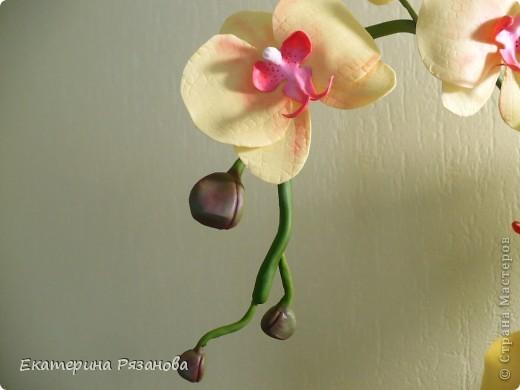 Привет ВСЕМ!!! У меня опять орхидея, уж больно понравилось мне ее лепить. И еще одну заказали. Так что эта неделя мне обеспечена....Столько цветов налепила (подрасчувствовалась), а потом сижу и думаю, куда же я их девать буду, вот и пришлось аж три ветки делать, но мне очень нравится. Такая яркая получилась, прям солнышко. фото 3