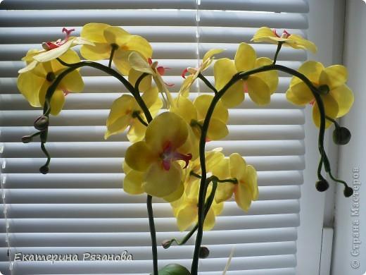 Привет ВСЕМ!!! У меня опять орхидея, уж больно понравилось мне ее лепить. И еще одну заказали. Так что эта неделя мне обеспечена....Столько цветов налепила (подрасчувствовалась), а потом сижу и думаю, куда же я их девать буду, вот и пришлось аж три ветки делать, но мне очень нравится. Такая яркая получилась, прям солнышко. фото 4