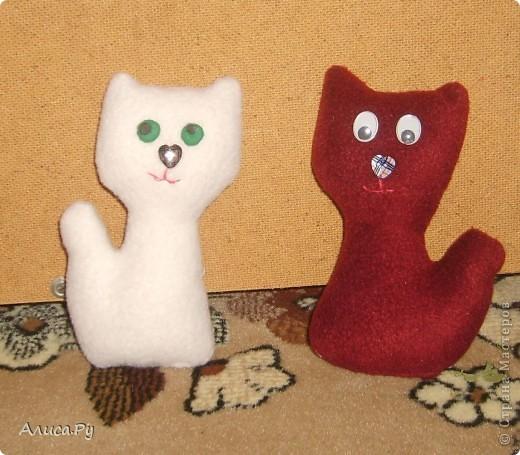 Привет, Страна! Вот и появились на свет мои новые кошечки-сестрёнки-подружки Долли и Молли.  фото 1