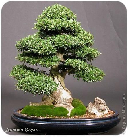 Новогоднее деревце фото 2