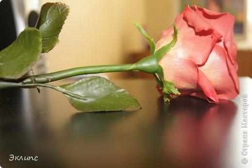Коралловая роза фото 2