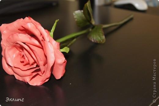 Коралловая роза фото 3
